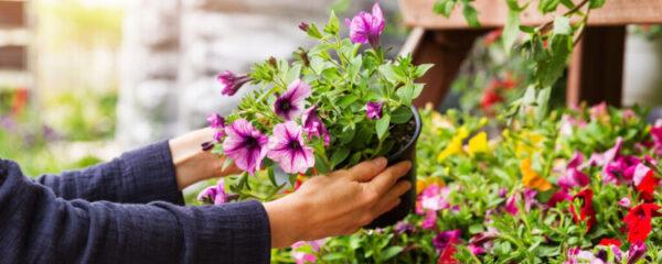 des plantes en ligne