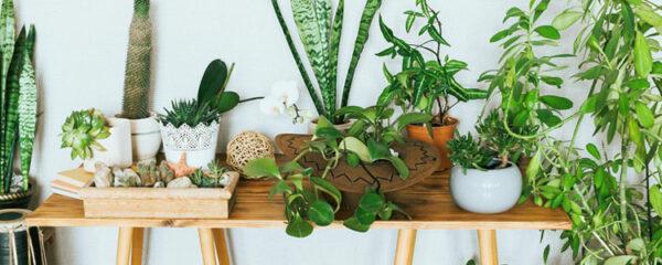 Entretenir vos plantes d'intérieur