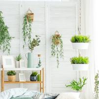 Compositions vegetales