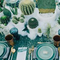 Theme cactus
