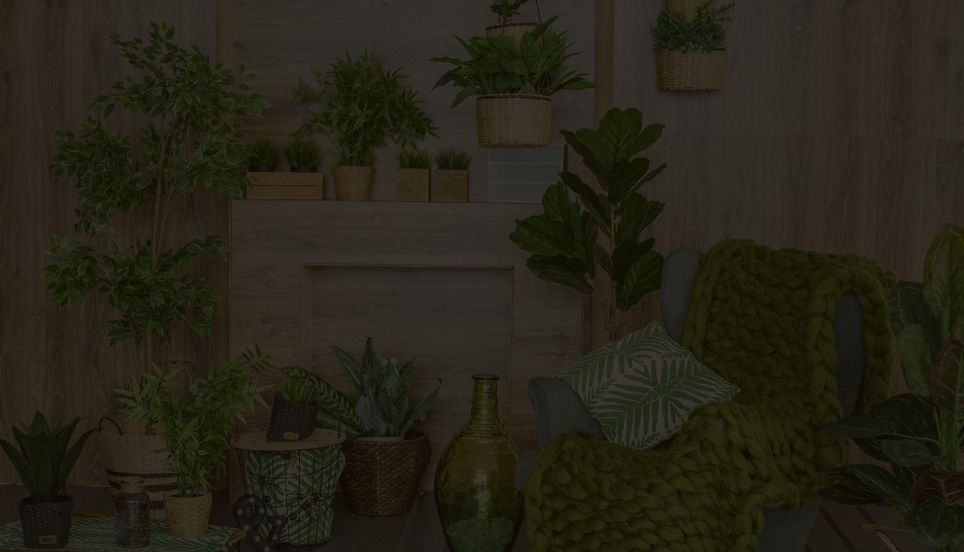 plantes d'interieurs