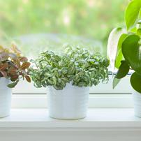 végétaliser votre intérieur